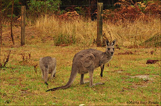 Abrir la puerta de la furgoneta y encontrarte a los colegas kangaroos