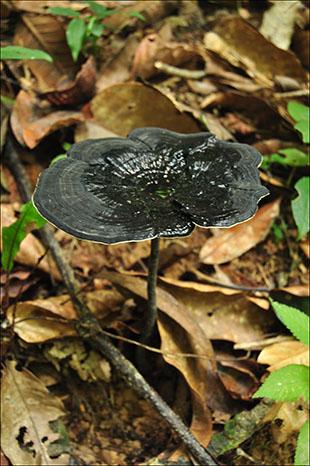 Una de las miles de setas que nacen con la humedad
