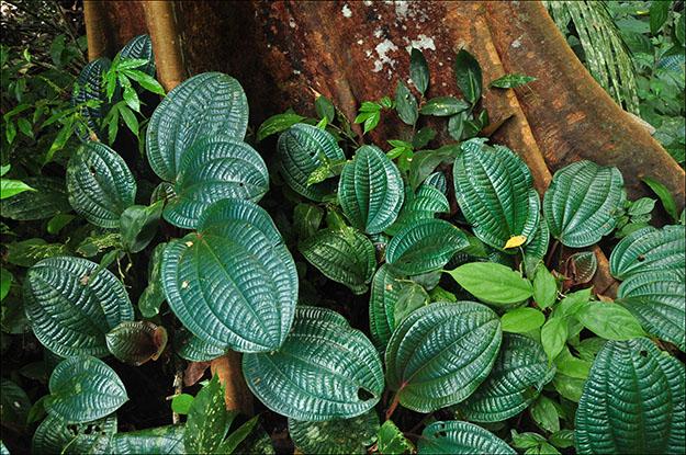 Curiosas hojas en la falda del árbol