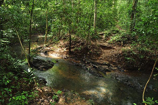 Paisaje por el interior de Taman Negara