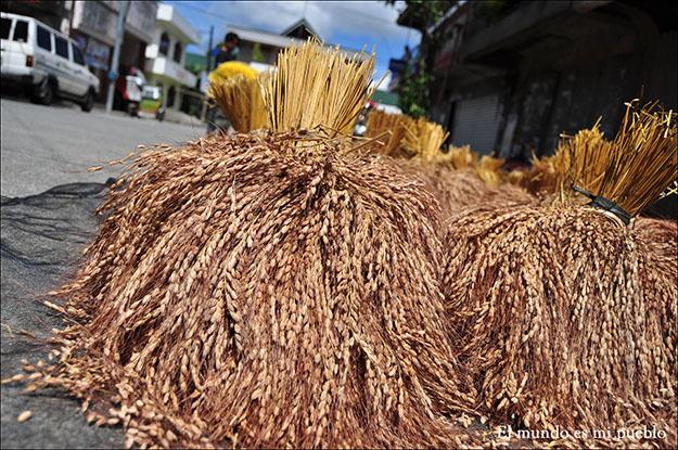 El arroz en el proceso de secado
