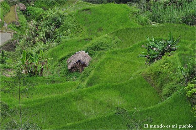 Las casas con el material de trabajo para labrar el arroz
