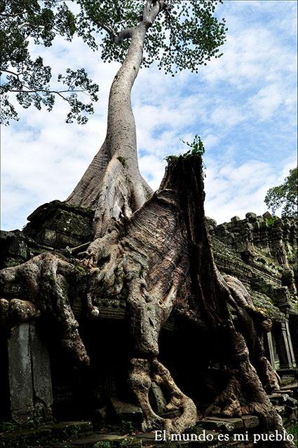 Uno de los árboles sobre el templo Ta Prohm