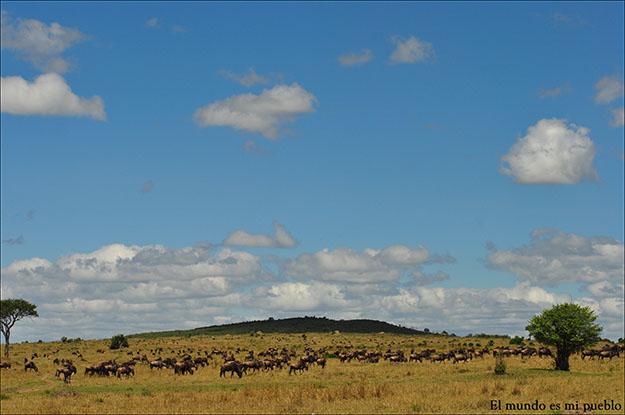 La sabana del Masai Mara salpicada por ñús y cebras
